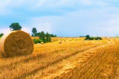 Colhendo os campos Colheita dourada amarela do trigo no verão Paisagem bonita com o lago no fundo Imagem de Stock