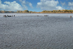 Colhendo peixes na piscicultura Imagens de Stock Royalty Free