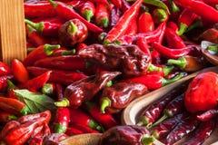 Colhendo pimentas Preparação para secar o tempero picante Venda das especiarias Imagens de Stock Royalty Free