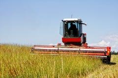 Colhendo um campo de grama para o feno Fotos de Stock Royalty Free