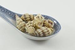 Colher com shell Fotografia de Stock Royalty Free