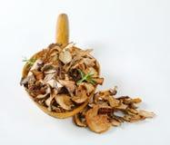 Colher de cogumelos secados Fotografia de Stock