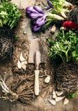 A colher de jardinagem rústica com vária mola floresce a planta no fundo de madeira Imagem de Stock Royalty Free