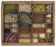 Colher de lentilhas verdes francesas Fotografia de Stock