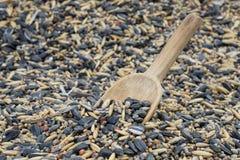 Colher na semente do pássaro Foto de Stock Royalty Free