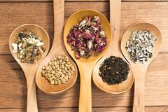 Colheres de madeira com as ervas diferentes para a infusão Fotos de Stock Royalty Free