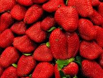 Colheu recentemente morangos vermelhas das morangos, as frescas e as suculentas diretamente acima fotografia de stock