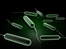 Coli bacteria. Digital illustration of coli bacteria in 3d on digital background Royalty Free Stock Photography