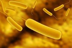 Coli bacteria Stock Image