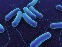 Coli bacteria. 3d rendered close up of coli bacteria Royalty Free Stock Photos