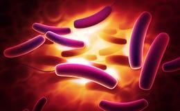 Coli bacteria royalty free illustration
