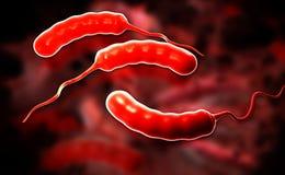 Coli bacteria Stock Photo