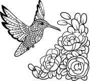 Colibrì antistress Immagine per le coloriture dello zentangle Illustrazione ENV 10 di vettore Fotografia Stock