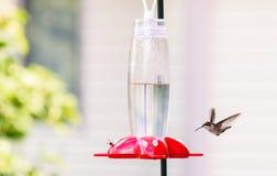 Colibrì & ape Fotografie Stock Libere da Diritti