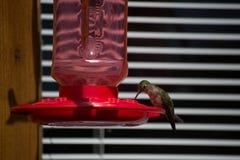 Colibrì appollaiato su un alimentatore rosso fotografia stock
