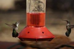 Colibrì che fissano giù a vicenda sopra un alimentatore fotografie stock