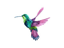 Colibrì di volo dell'acquerello Fotografie Stock Libere da Diritti