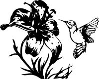 Colibrì e fiori tropicali Fotografia Stock Libera da Diritti