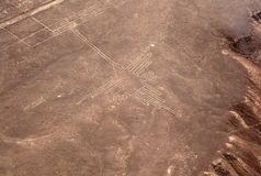 Colibrì a Nazca fotografie stock