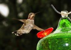 colibrì Vasto-munito all'alimentatore immagini stock
