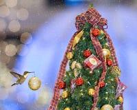 Colibrí de la Navidad Imágenes de archivo libres de regalías