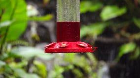 Colibrí hermoso mismo en Costa Rica almacen de video