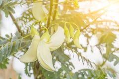 Colibrí vegetal con la luz por la mañana fotos de archivo