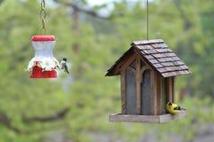 Colibrí y Goldfinch americano en Birdfeeders Fotografía de archivo libre de regalías