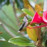 Colibri à un conducteur en Caroline du Nord photos stock