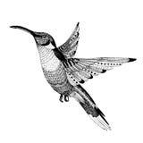 Colibri вектора нарисованное рукой Стоковые Фотографии RF