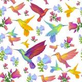 Colibri -蜂鸟样式背景 免版税库存照片