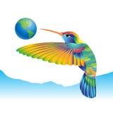 Colibri Foto de Stock Royalty Free