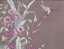 Colibri. Stockbild