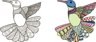 colibri illustration stock