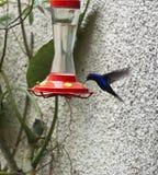 Colibri royalty-vrije stock foto's