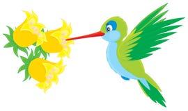 Colibri illustration libre de droits