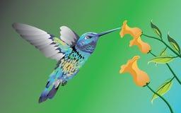 colibri Photos stock