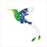 Colibri Obraz Royalty Free