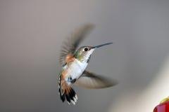 Colibri Images stock