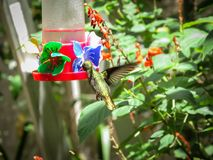 Colibri alimentant sur Sugar Water Feeder images stock