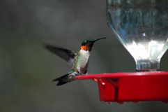 Colibri au câble d'alimentation photographie stock
