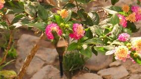 Colibri coloré sur une fleur dans la lumière arrière naturelle banque de vidéos