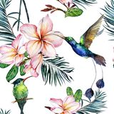 Colibri colorido hermoso y flores rosadas del plumeria en el fondo blanco Modelo inconsútil tropical exótico Pintura de Watecolor ilustración del vector