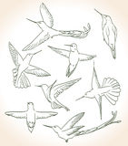 Colibri. Drawing in line art style Stock Photos