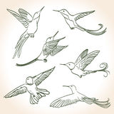 Colibri drawing. Made in line art style Royalty Free Stock Image
