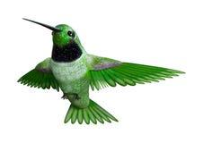 colibri du rendu 3D sur le blanc Photographie stock