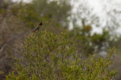 Colibri en nature Photographie stock libre de droits