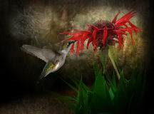 Colibri et fleur illustration de vecteur