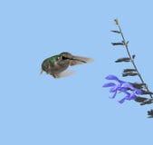 Colibri et fleur Photographie stock
