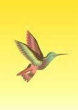 Colibri fågel royaltyfri illustrationer